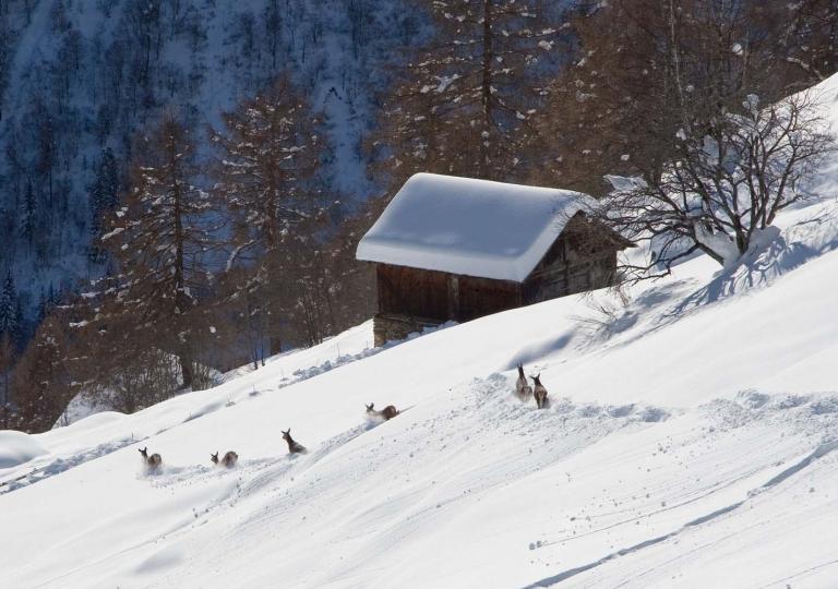 Cervi nella neve_ Ph M. Angeli